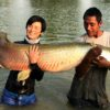 アマゾンBKK(amazon bkk)でピラルクーを釣りたいなら 2019年版
